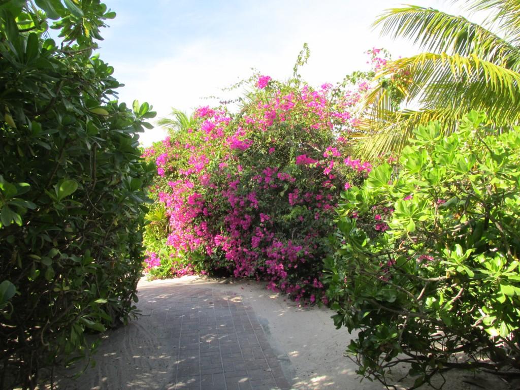 14.12.20 Half Moon Cay 6 Path