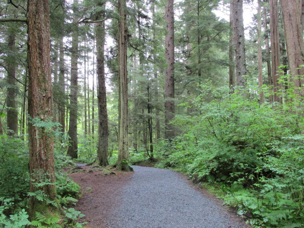 06:18:15 Sitka Rain Forest Trail 6